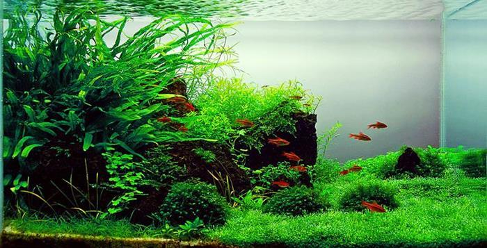 reduce stress with aquarium