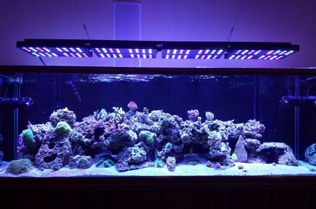 Ocean Revive led light